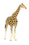 Illustration Wilde Tiere - Giraffe 3 Royalty Free Stock Photos