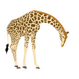 Illustration Wilde Tiere - Giraffe 2 Stock Photo