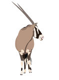 Illustration Wilde Tiere - Oryx 3 Stock Photography