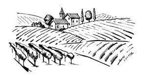 Illustration of wineyard. Vector vintage hand drawn illustration of wineyard Stock Images