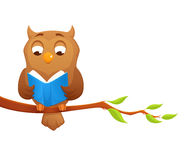 Illustration of a wise owl reading a book Stock Photos