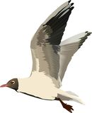 Illustration With Gull Stock Image