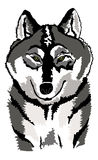 Black and white/grey wolf illustration Royalty Free Stock Images