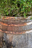 Illustration of wooden barrel. Old wooden barrel with rusted lag. S and green plants above Royalty Free Stock Photos
