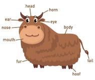 Illustration of yak vocabulary part of body Royalty Free Stock Photo