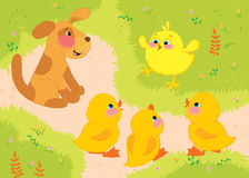 Illustration. A yellow chicken cheers ducks and puppy. Royalty Free Stock Photography
