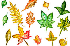 Illustration yellow green leaves of various shapes. On a white background Royalty Free Stock Photo