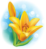 Illustration of yellow lily. Vector illustration of yellow lily Royalty Free Stock Images