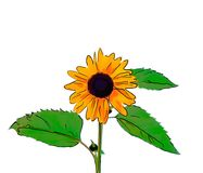 Illustration of a yellow sunflower with a black circle in the ce. Nter, a green stem and leaves on a white background Royalty Free Stock Photography