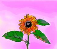 Illustration of a yellow sunflower with a black circle in the ce. Nter, a green stem and leaves on a pink background Stock Images