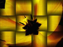 Illustration of yellow tulip close-up in metallic gold and orange. Computer Assisted generation of 3D Abstract graphics of yellow tulip close-up in metallic gold royalty free illustration