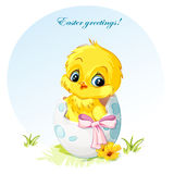Illustration of a young chicken in egg pink bow.  Stock Image