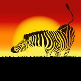 Illustration of zebra silhouette at sunset, vector Stock Photos