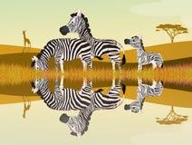 Zebras on river. Illustration of zebras on river Royalty Free Stock Images