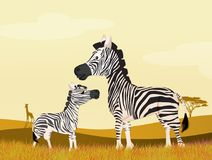 Zebras in the savannah. Illustration of zebras in the savannah Royalty Free Stock Photography