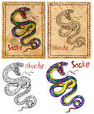 Illustration with zodiac animal - Snake Royalty Free Stock Image