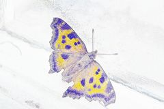 Illustrationblyertspenna: fjäril nära fönstret royaltyfri fotografi
