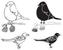 Illustrationdomherre- och skatafåglar Royaltyfri Fotografi