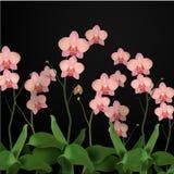 Illustrationen för blommaorkidévektorn steg Royaltyfri Foto