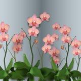 Illustrationen för blommaorkidévektorn steg Royaltyfri Fotografi