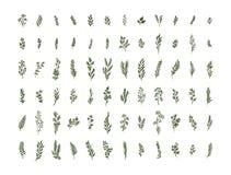Illustrationen in för den växt- organiska naturen för vattenfärgen ställde den blom- på vit bakgrund vektor illustrationer