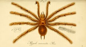 Illustrationer av djuret Arkivbild