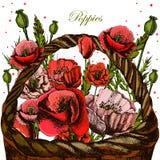 Illustrationer med vallmo i en vide- korg Royaltyfria Bilder