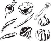 illustrationgrönsaker Royaltyfria Bilder
