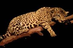 illustrationleopard Royaltyfria Bilder
