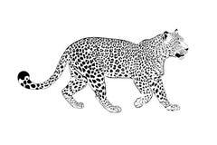illustrationleopardwhite Royaltyfria Bilder