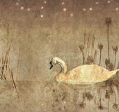 illustrationmonokromswan Royaltyfri Foto