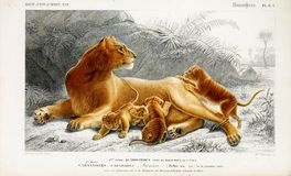 Illustrations of animal. Ancient illustration of the animal. Hand drawn Royalty Free Stock Photo