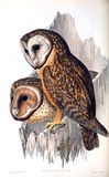 Illustrations of animal. Ancient illustration of the animal. Hand drawn Royalty Free Stock Images