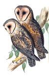Illustrations of animal. Ancient illustration of the animal. Hand drawn Stock Photo