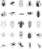 Illustrations of Bugs. An illustration of many different bugs and beetles Royalty Free Stock Photo