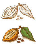 Illustrations of cocoa Royalty Free Stock Image