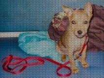 Illustrations. Cross-stitch. Yellow dog. Royalty Free Stock Photos