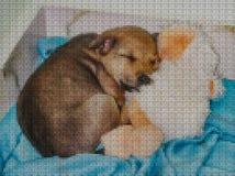 Illustrations. Cross-stitch. Yellow dog. Stock Photo
