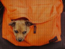 Illustrations. Cross-stitch. Yellow dog. Stock Photos