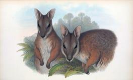 Illustrations d'animal illustration stock