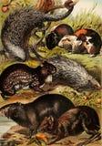 Illustrations d'animal Image libre de droits