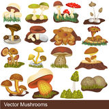 Illustrations de champignon de couche Photographie stock libre de droits