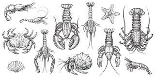 Illustrations de vecteur de crustacés réglées Image stock