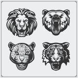 Illustrations des animaux sauvages Ours, lion, léopard et tigre Photo libre de droits