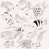 Illustrations fish. Ocean. Monochrome. Illustration of fish. Ocean. It can be used for books Stock Photo