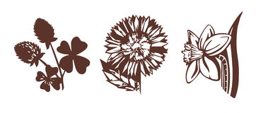 Illustrations of flowers Royalty Free Stock Photography
