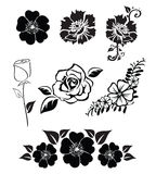 Illustrations of flowers. Isolated black and white illustrations of flowers Stock Images