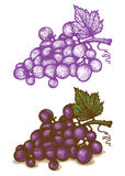 Illustrations of grapes Royalty Free Stock Photo