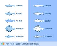 Illustrations of Irish fishes Stock Image
