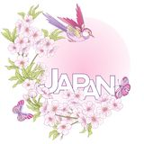 Illustrations with Japanese blossom pink sakura and birds and wo Stock Photography